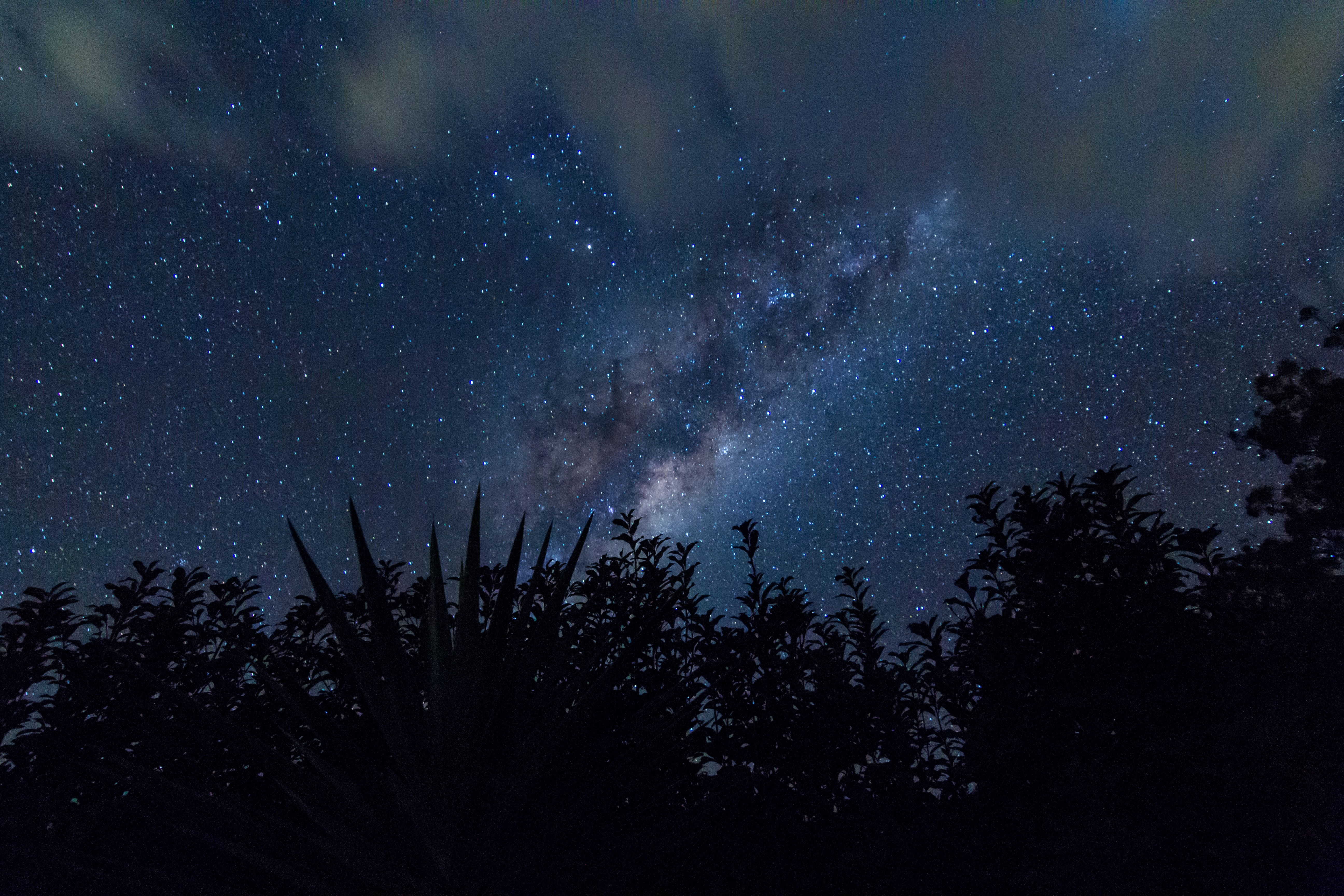silhouette of trees with stars