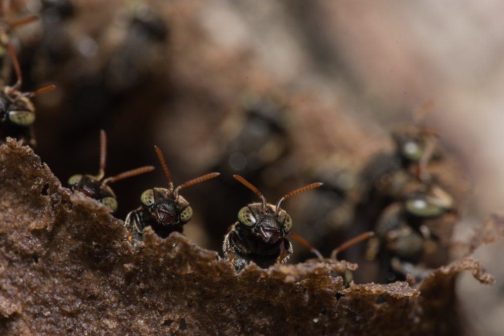 close up photography of black ants