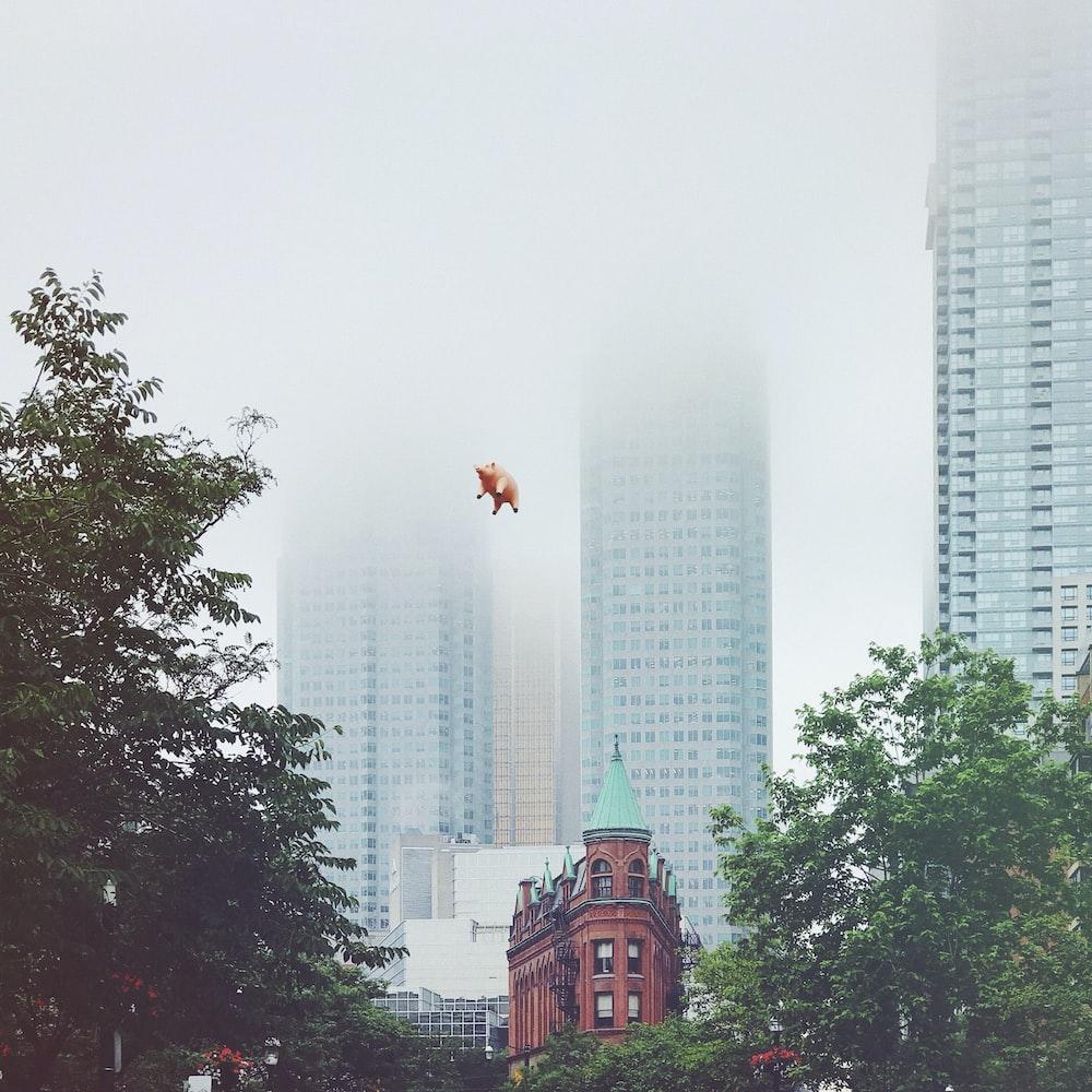 flying pig during daytime