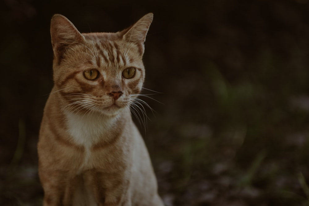 rule of thirds photography of orange tabby cat
