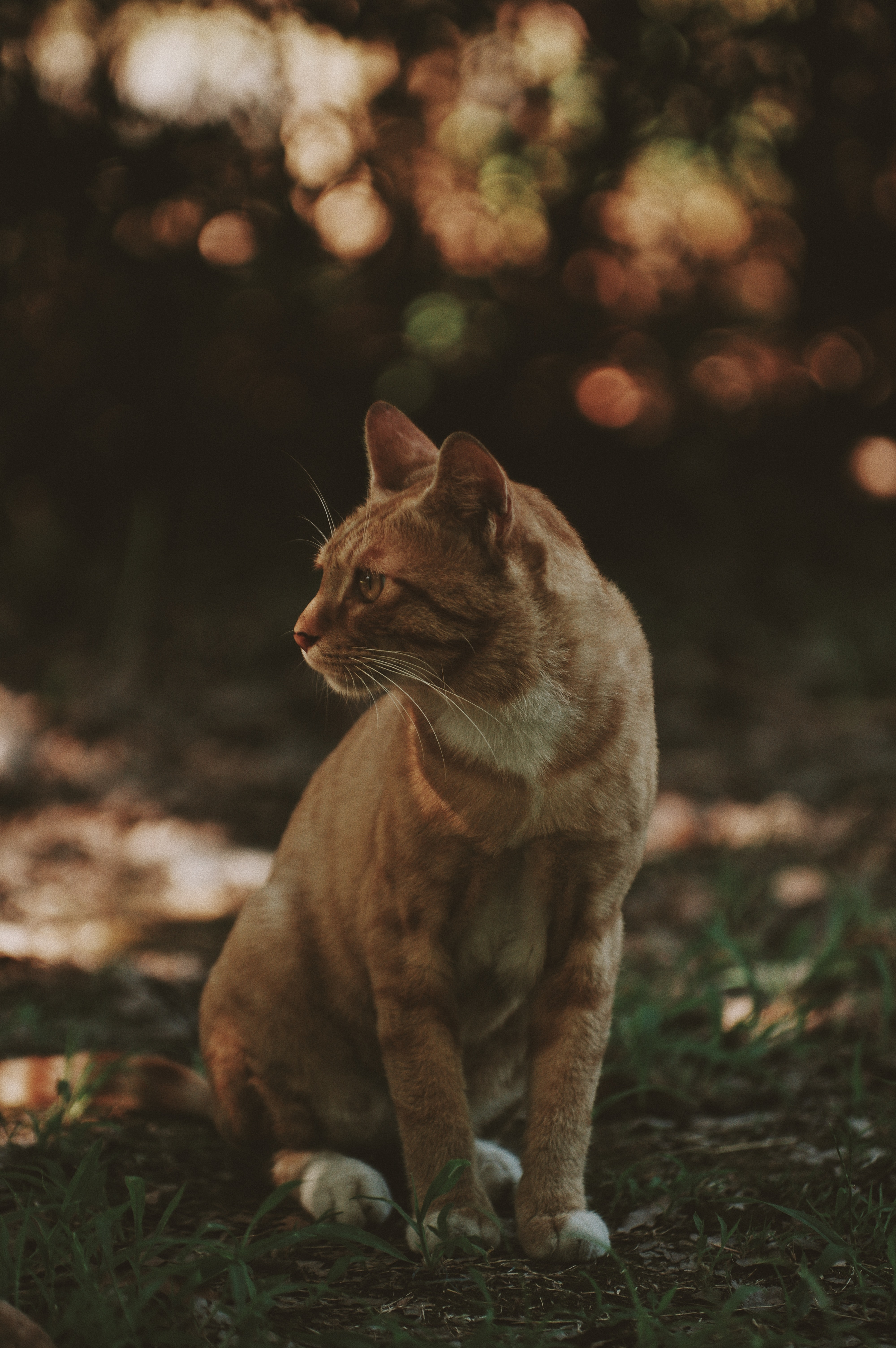 selective focus photography of orange tabby cat sitting on grass field