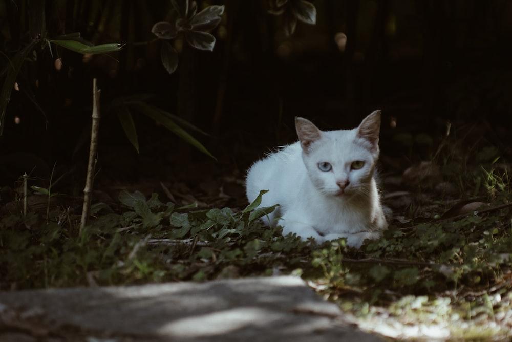 white cat on gray concrete pavement