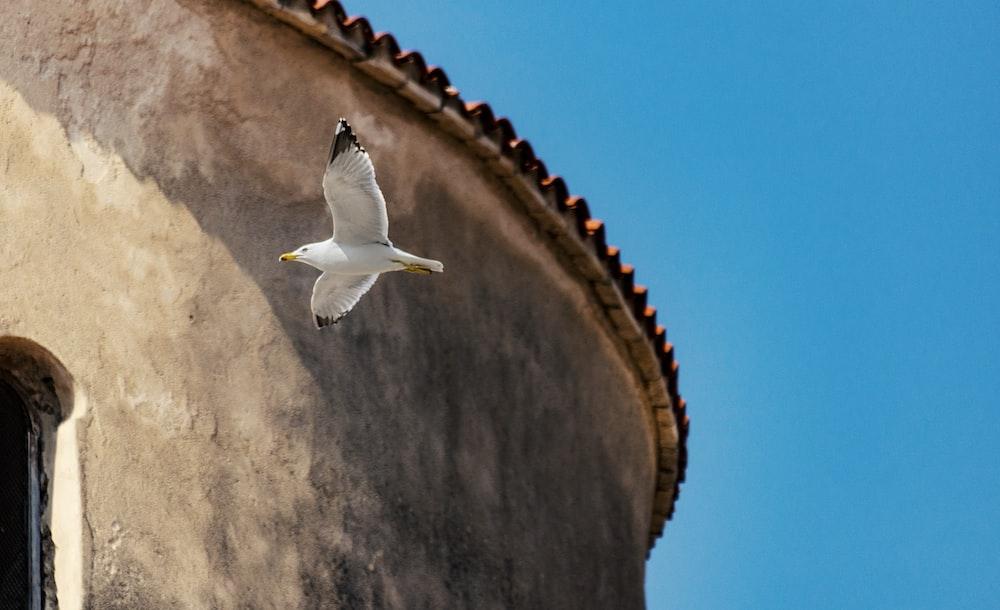 white bird flying under blue sky during daytimne