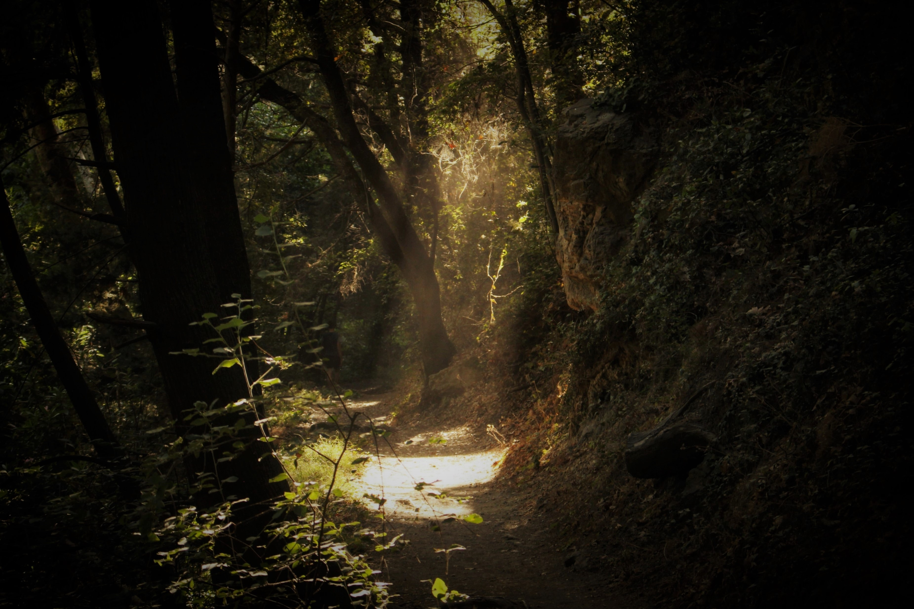 pathway of forest with sun ray