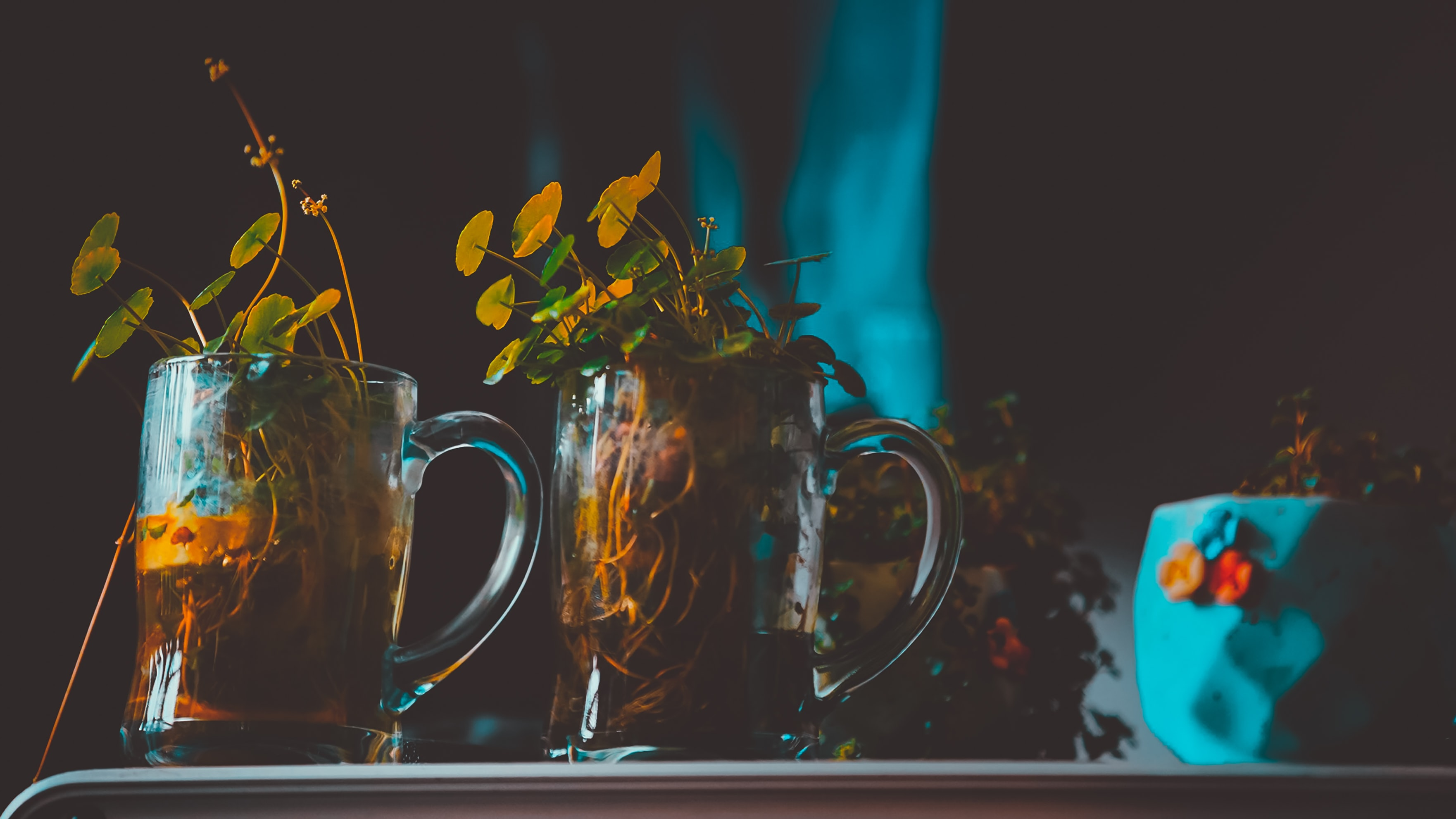 green leafed plants in glass tankards