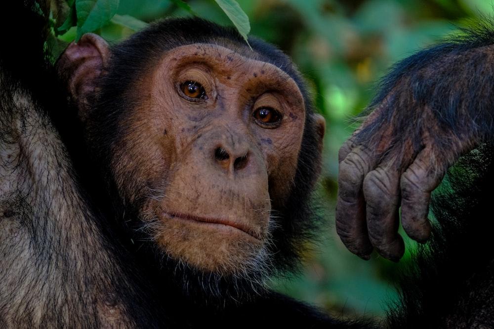 macro shot of brown monkey