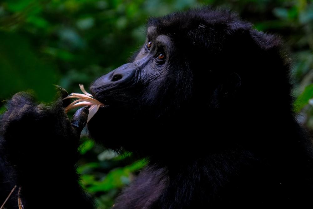 selective focus photo of black ape