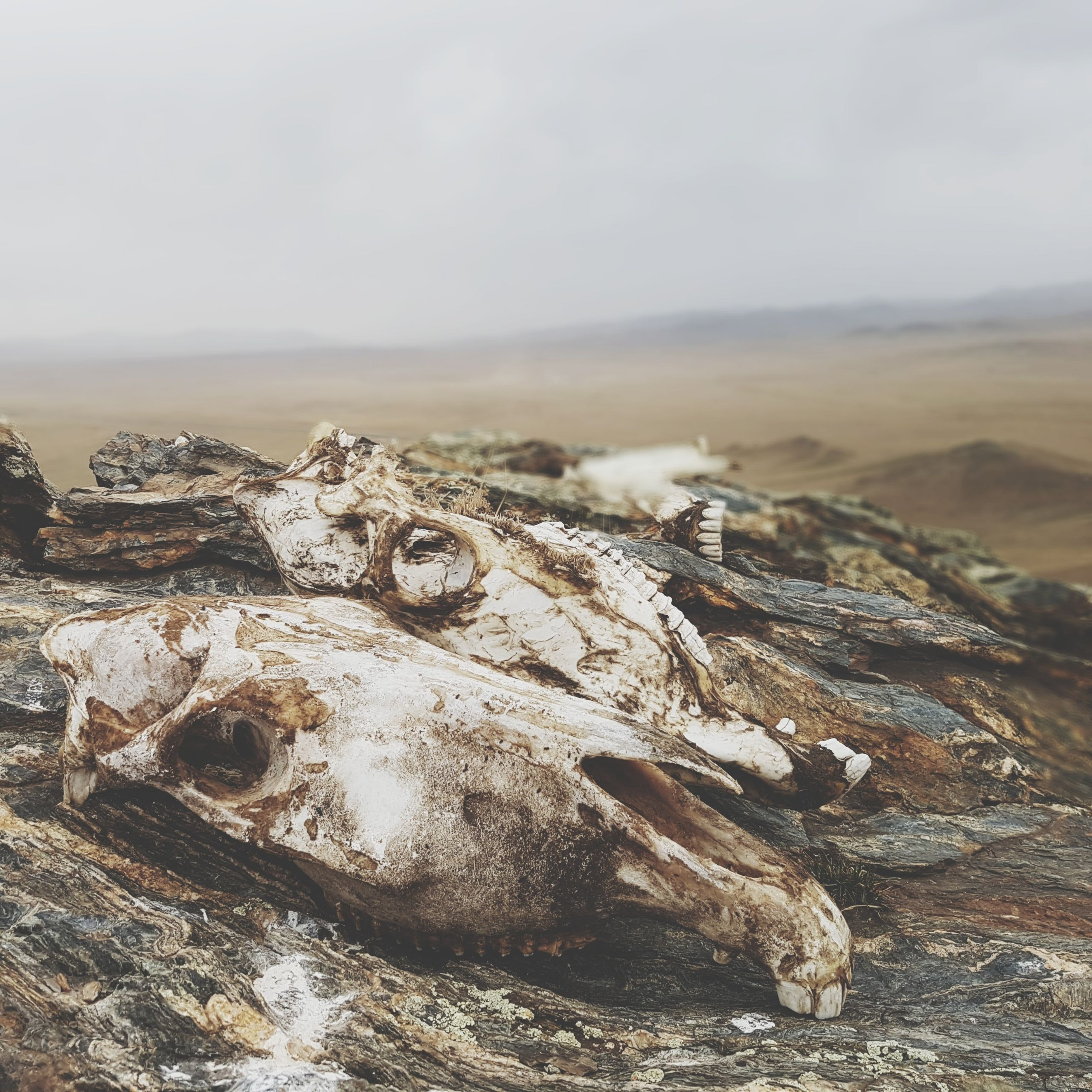selective focus photography of animal skull