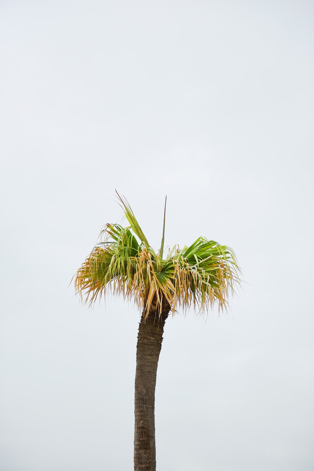 photo of brown and green palm tree