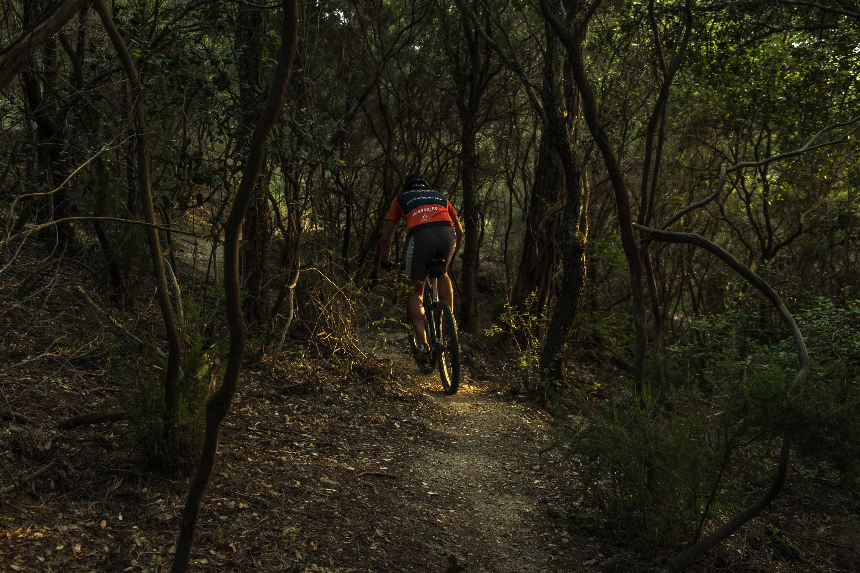 man riding mountain bike between green leaves tree during daytime