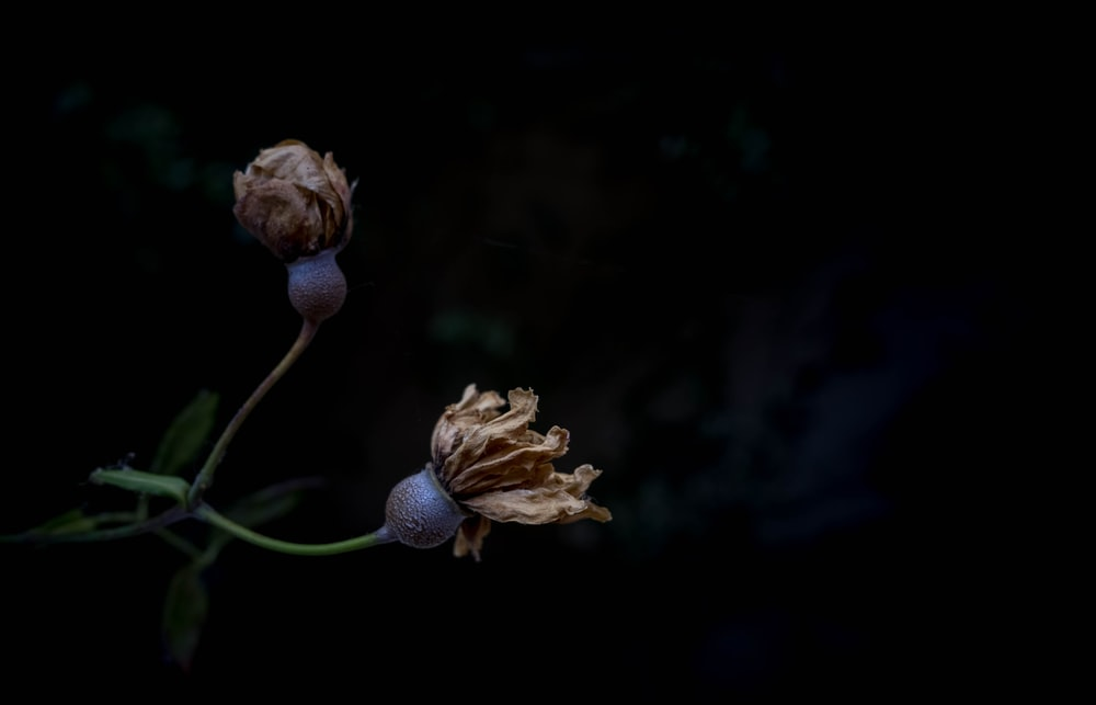 selective focus photo of dried flower