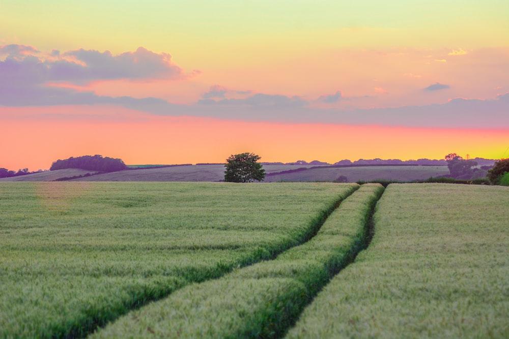 grass field in golden hour background