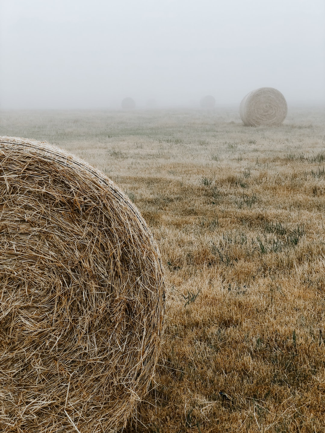 I can't tell you how many times I've driven past these hay bales on the way to work. BUT TODAY… THE FOG! So I had to actually pull over this time and see what I can do. No camera, no drone… only my iPhone X. Hope you can find these useful :)