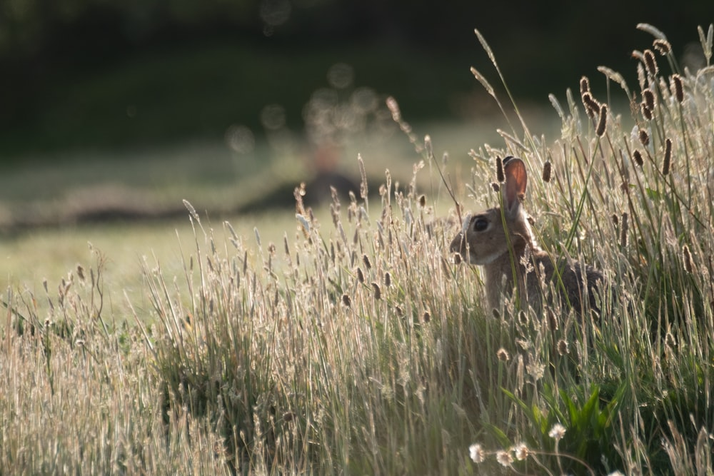 selective focus photography of gray rabbit on grass field