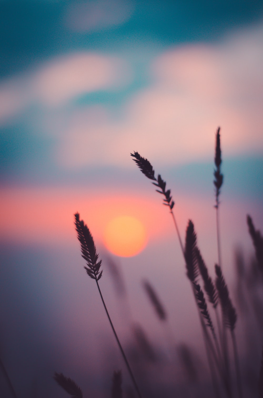 silhouette of wheat during sunset