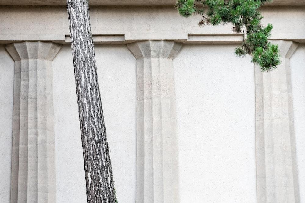 green leaf tree near beige painted wall