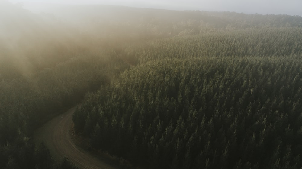 aerial photography of concrete road near trees at daytime