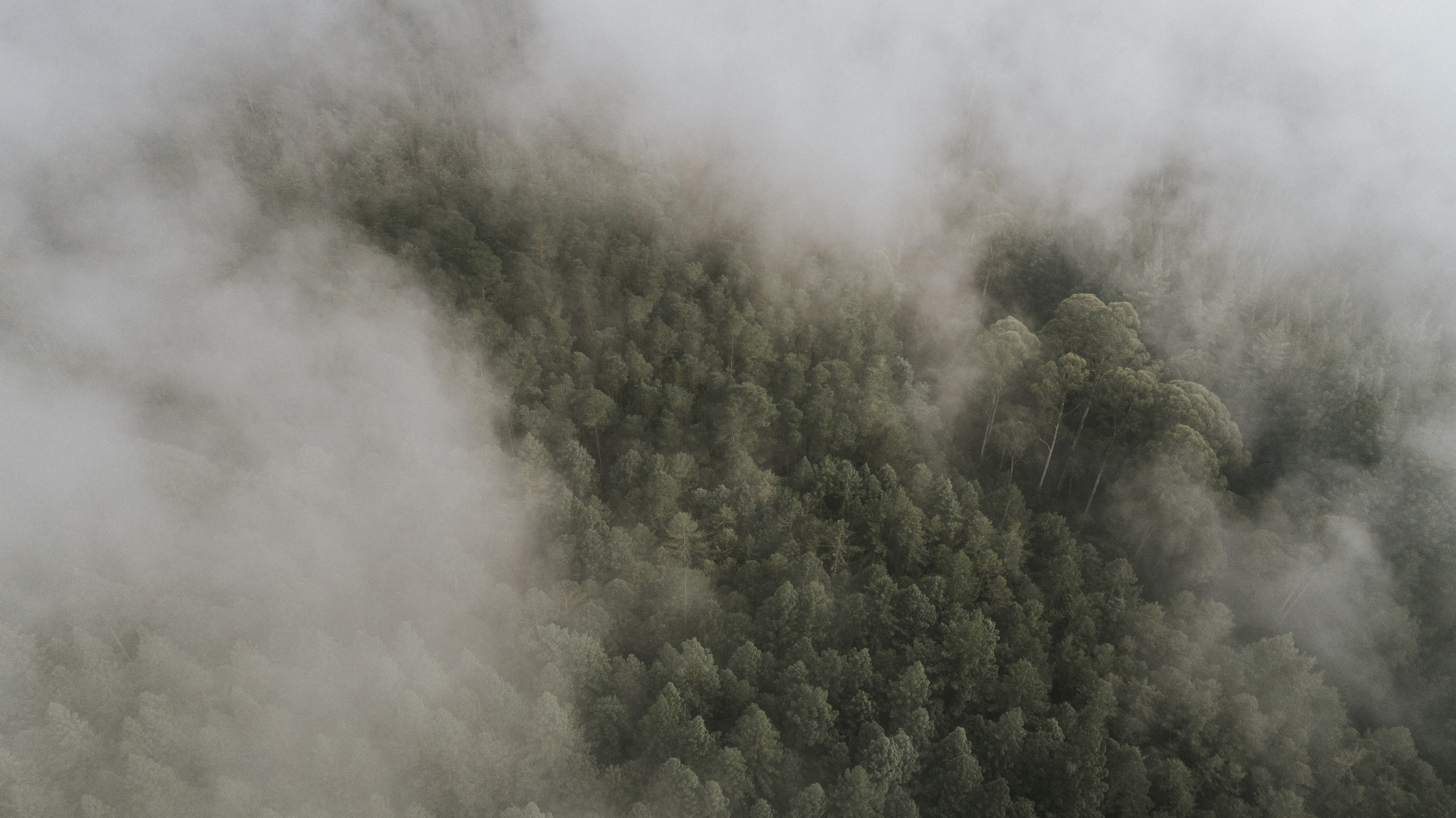 green forest under cloudy sky