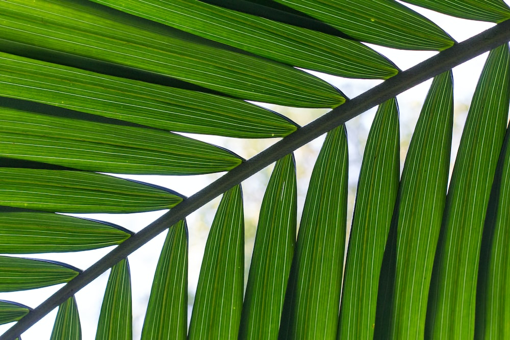 close-up photo of leafed plant