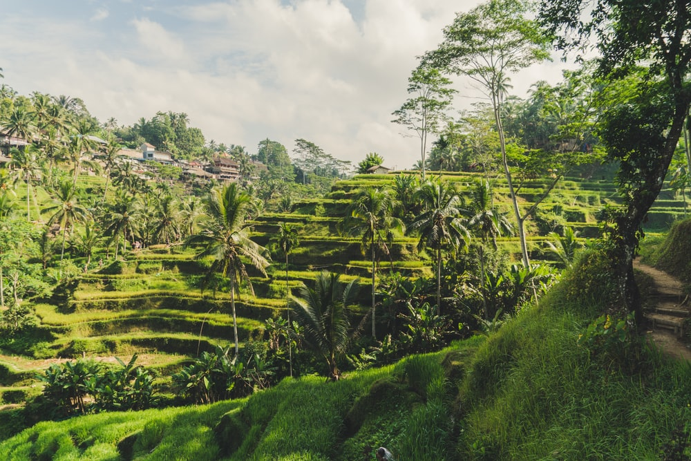 rice terraces on mountain side under blue sky at daytime