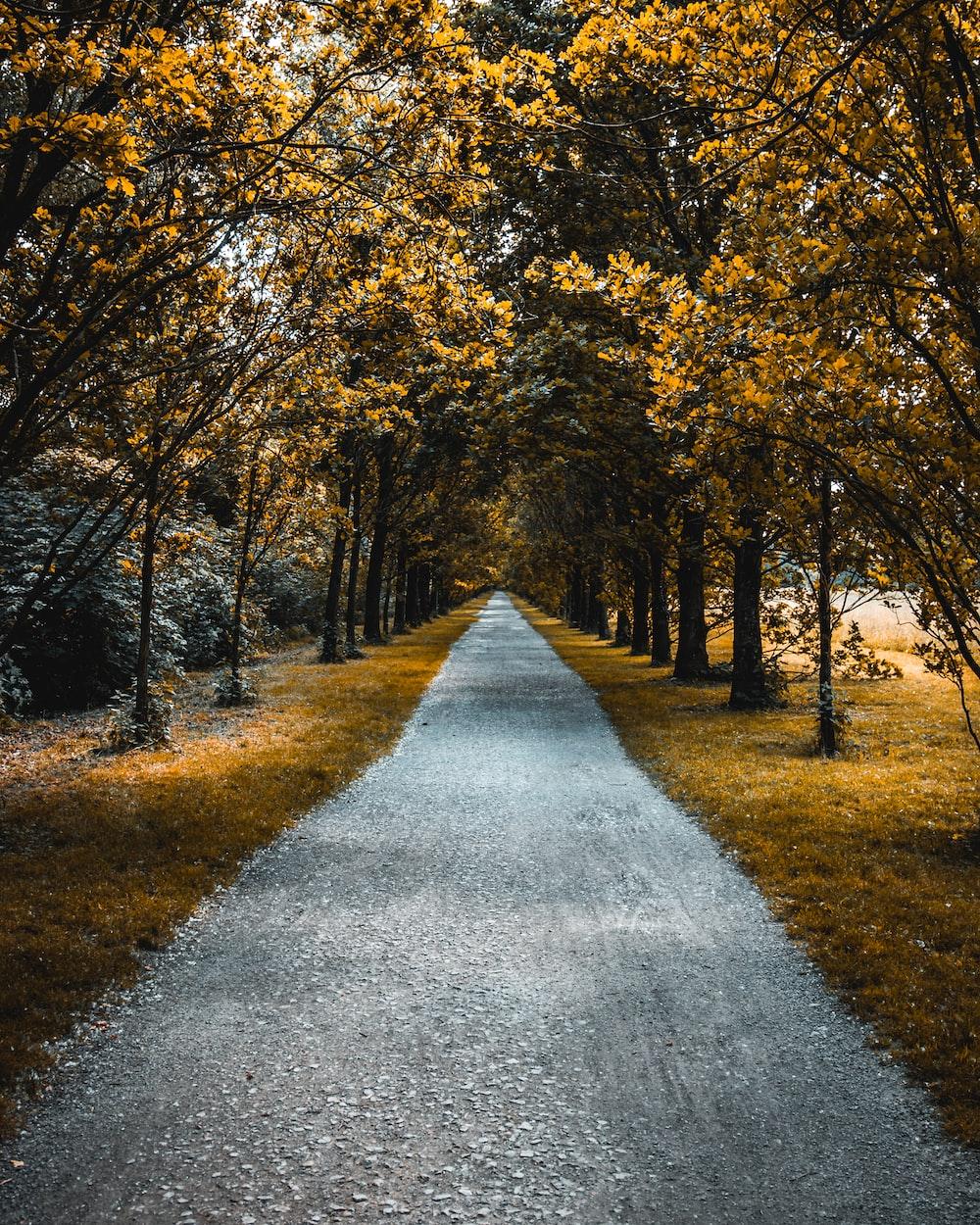 pathway between of brown leafed trees