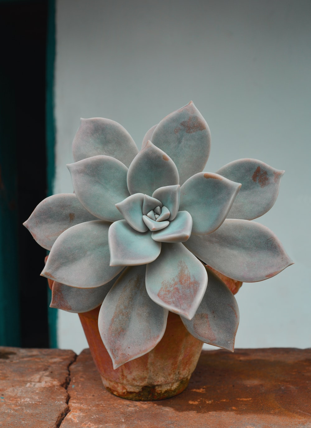 close-up photo of green succulent plant