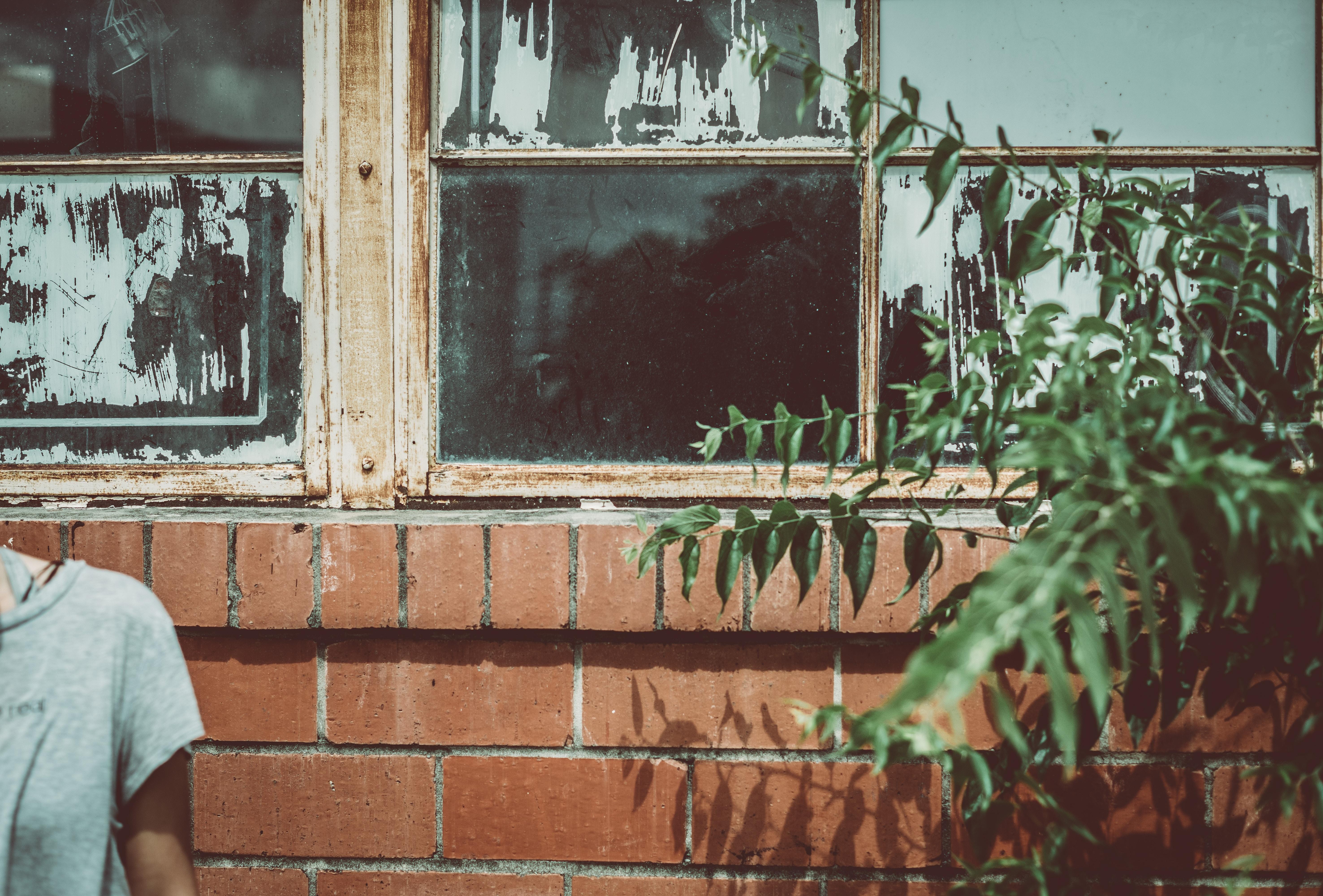 green leaf plant near window