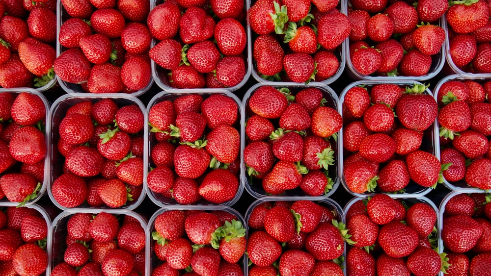 100 strawberry pictures download free images on unsplash