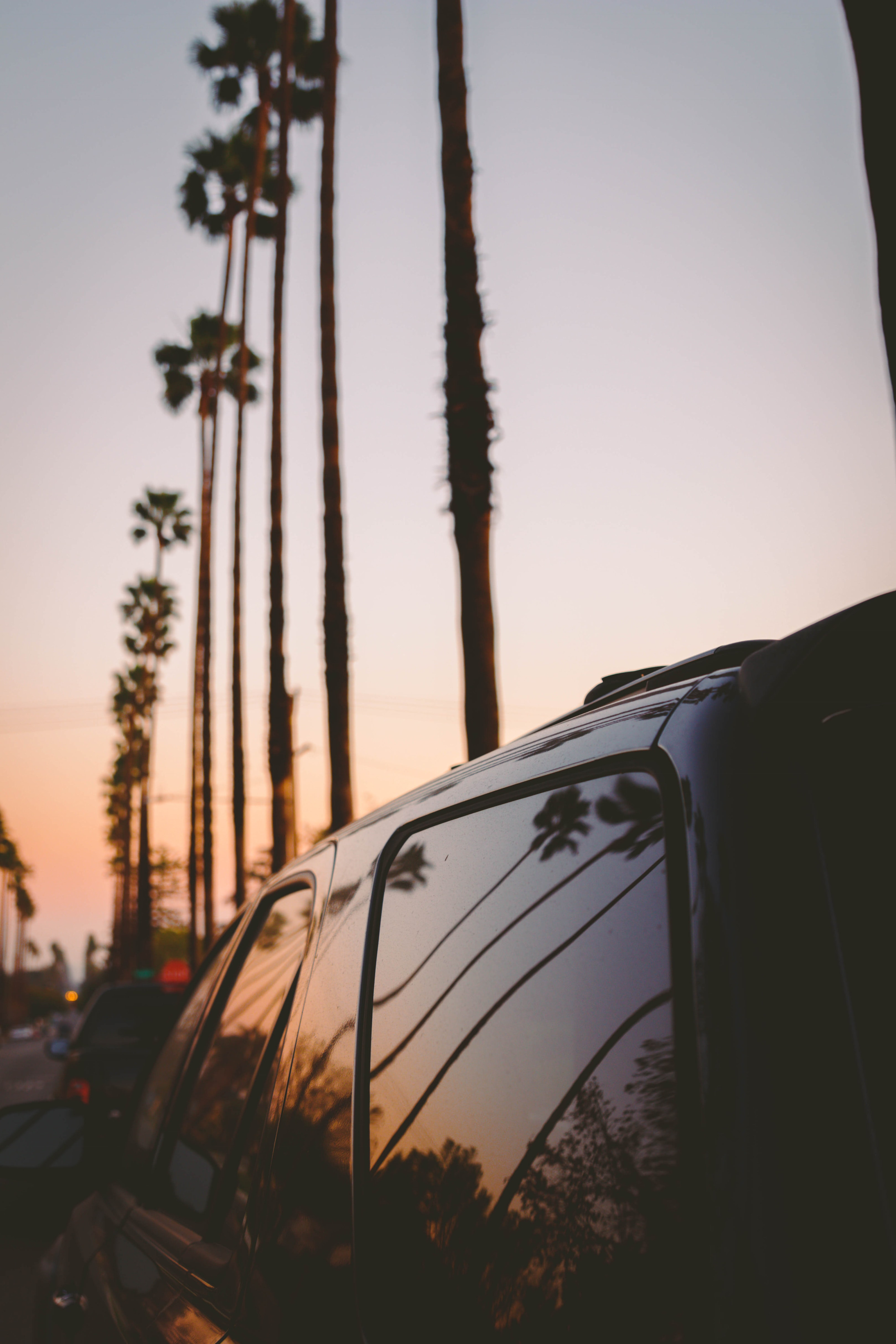 silhouette of tree and vehicle