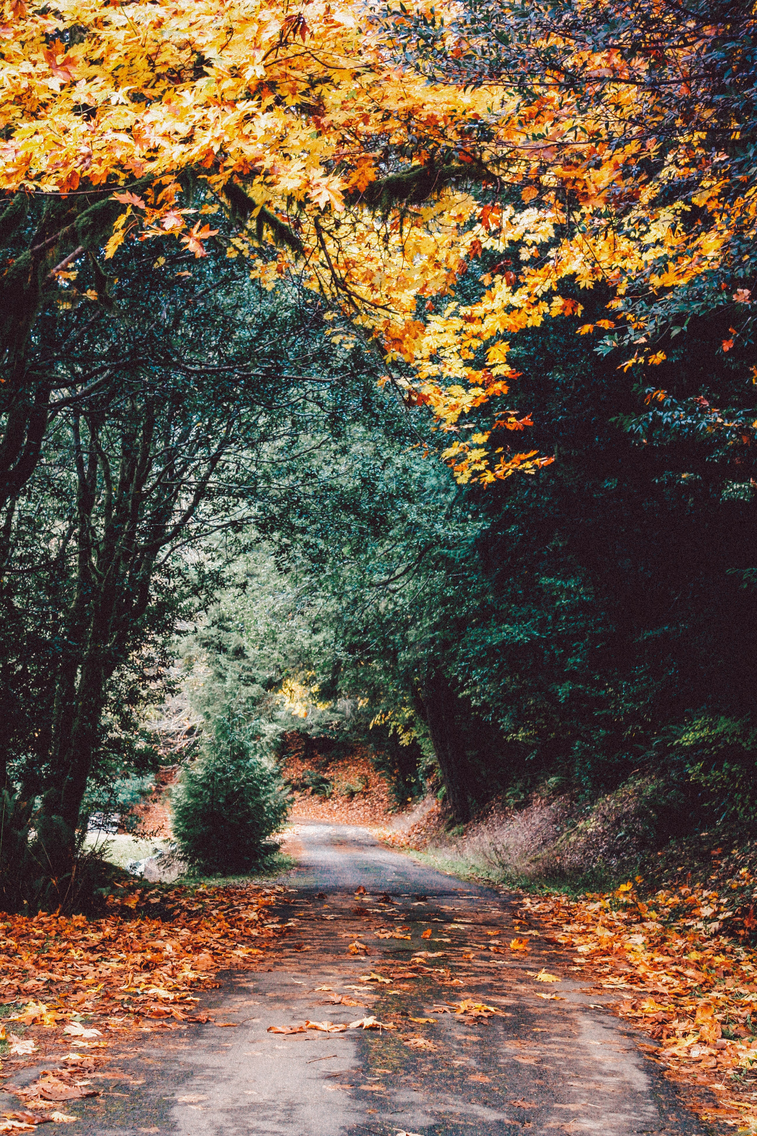 The season to come autumn-poetry-2018 stories