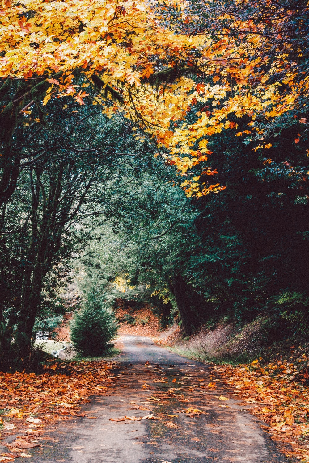 autumn images download free images on unsplash