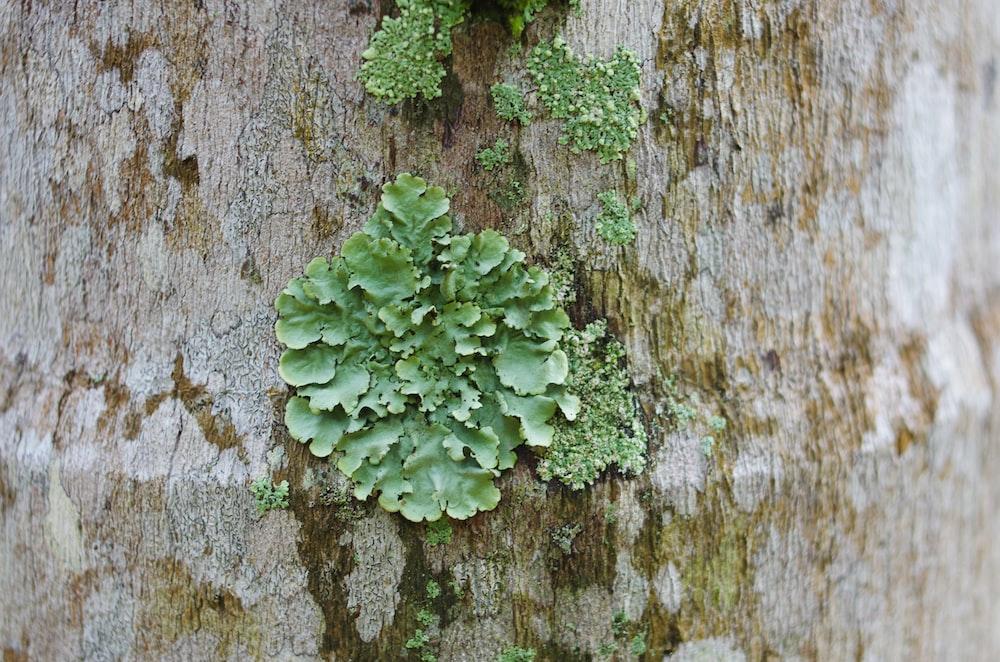green algae on tree trunk