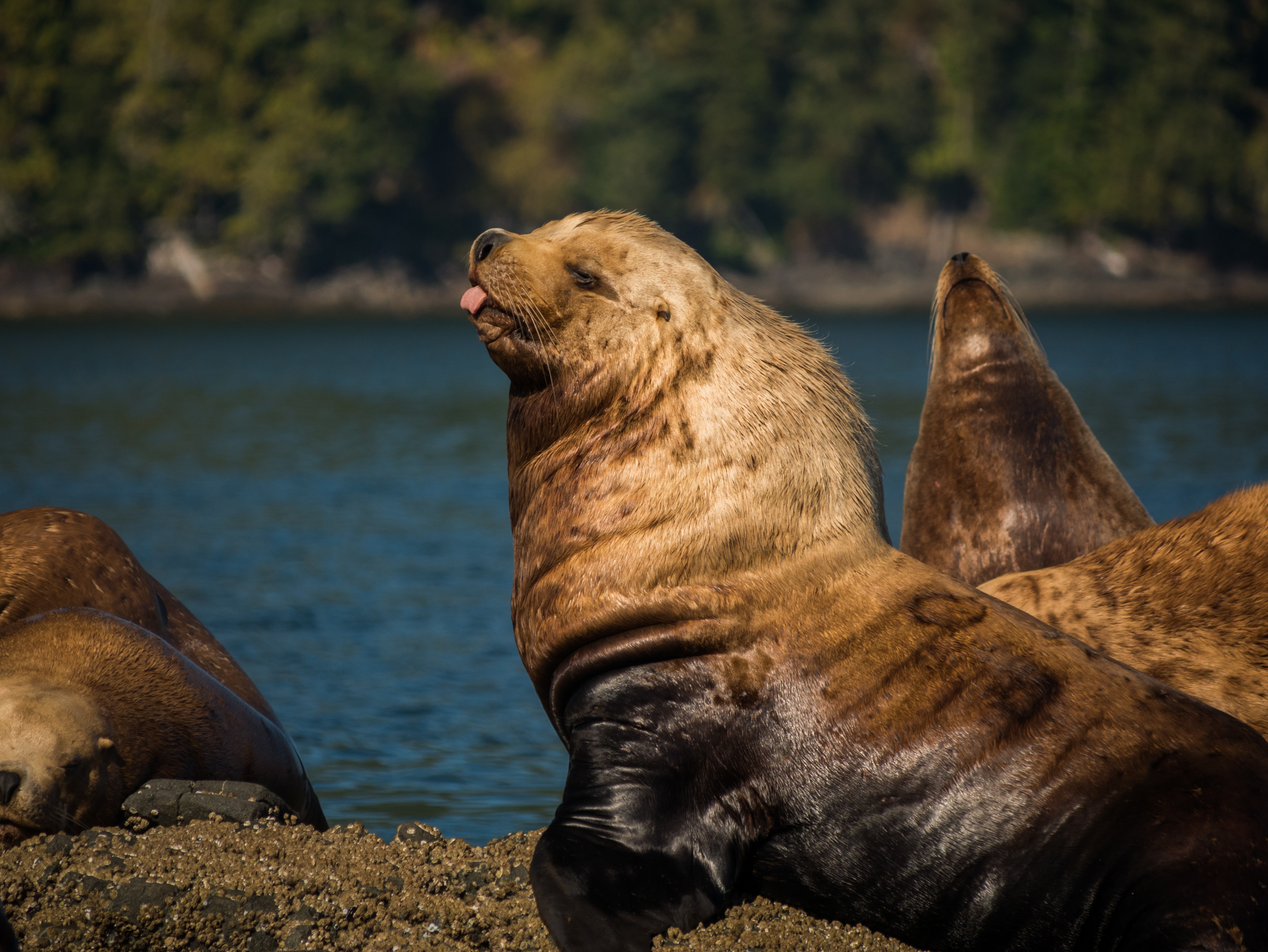 group of sea lions near body of water
