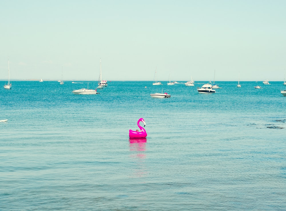 pink flamingo floats