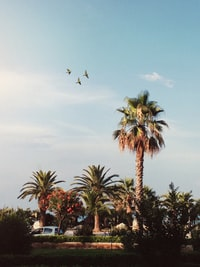palm trees under clear blue ksy