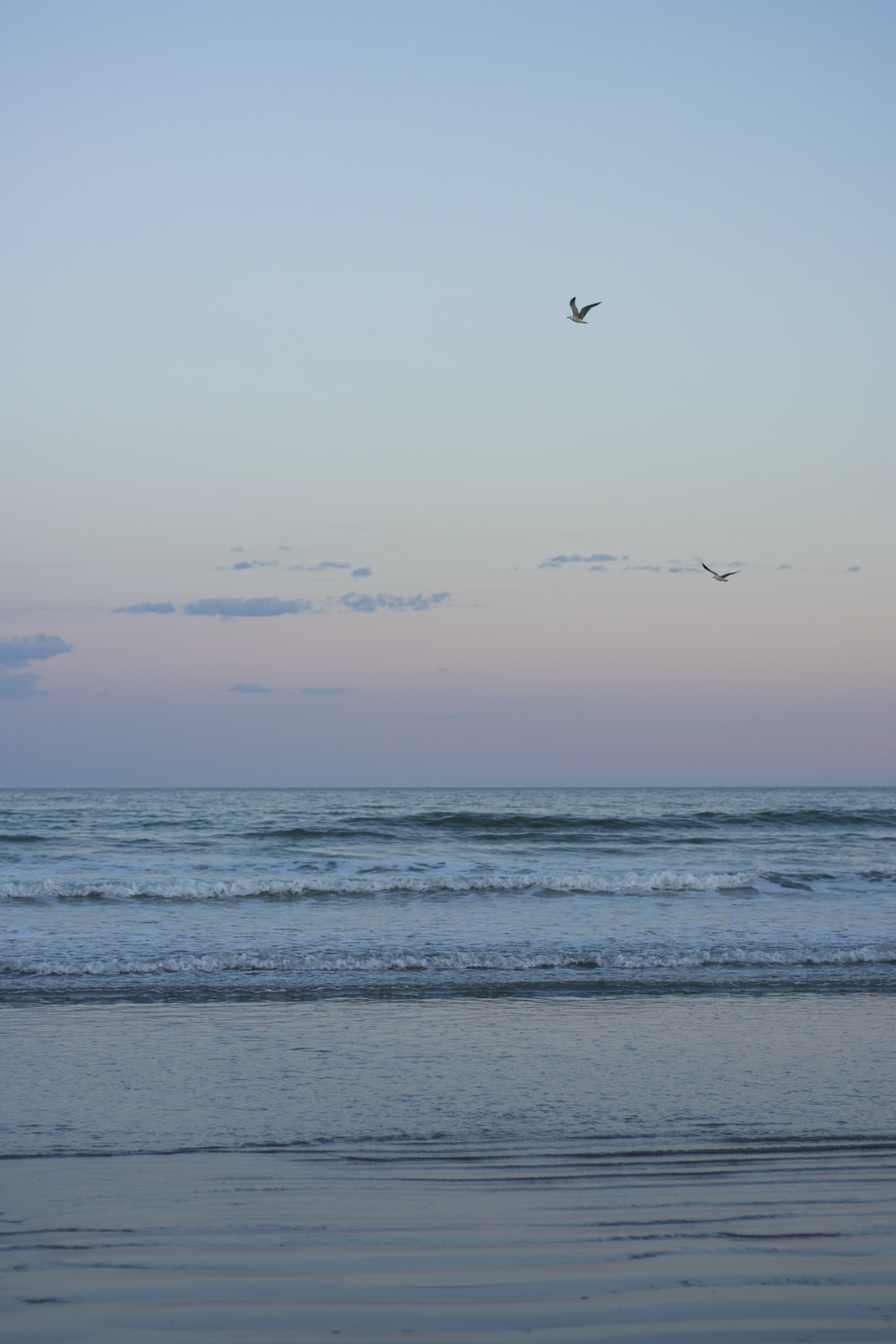 two birds flying over horizon during day time