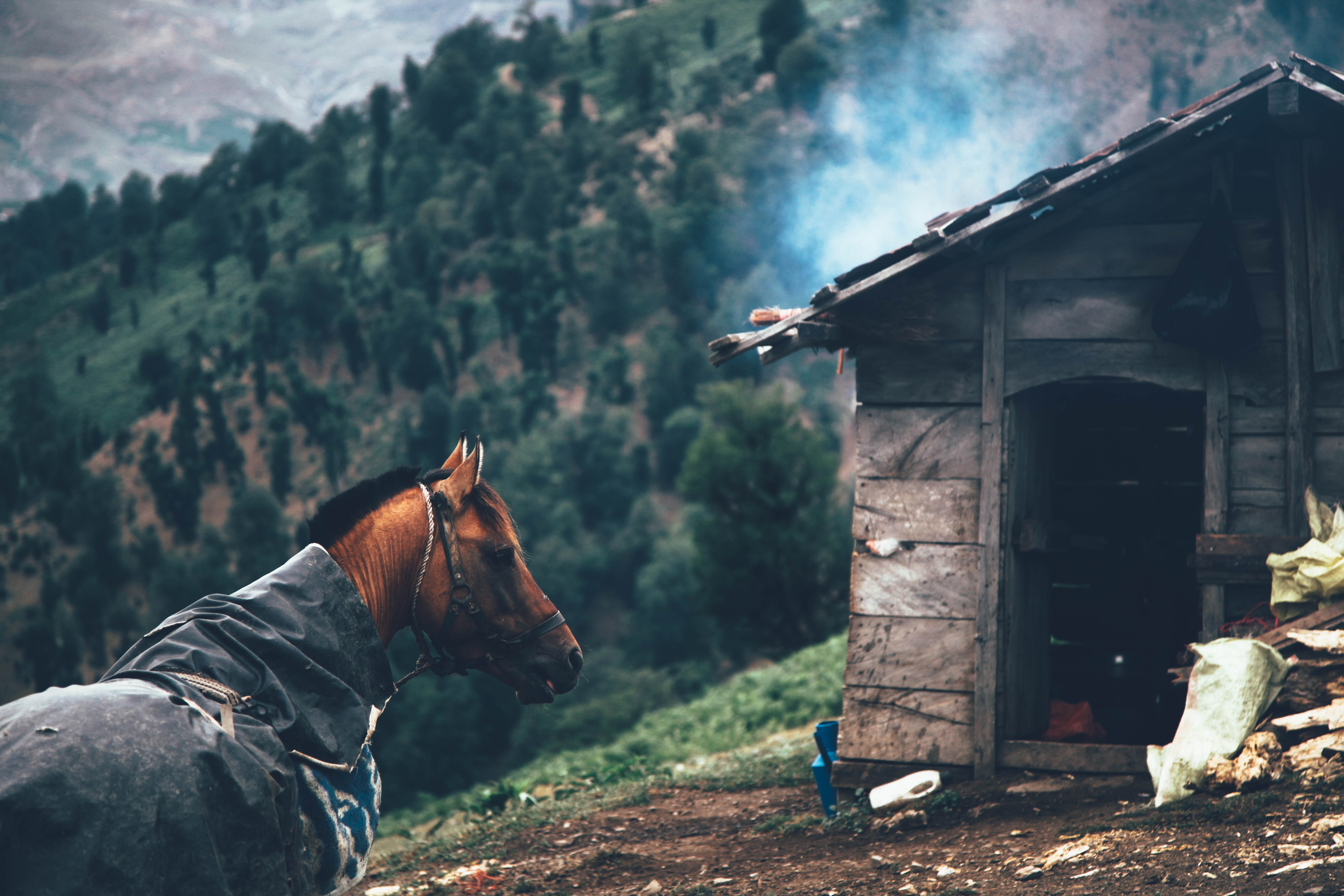 brown horse outside house on mountain