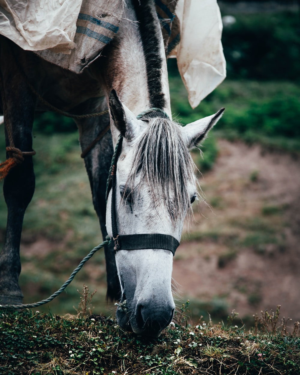 wildlife photography of horse eating grass