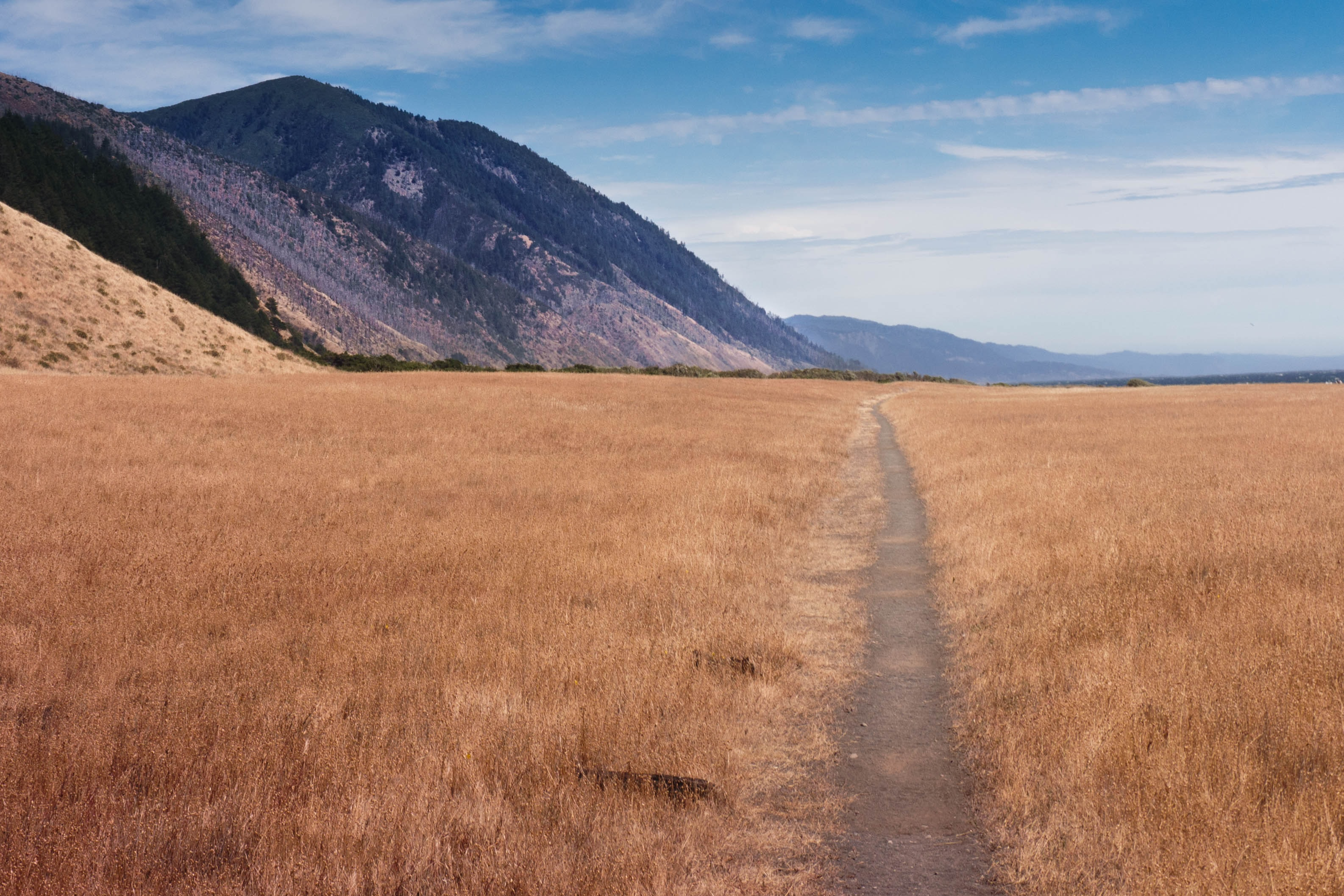 pathway between grass field under blue sky