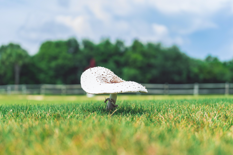 white mushroom on green grass