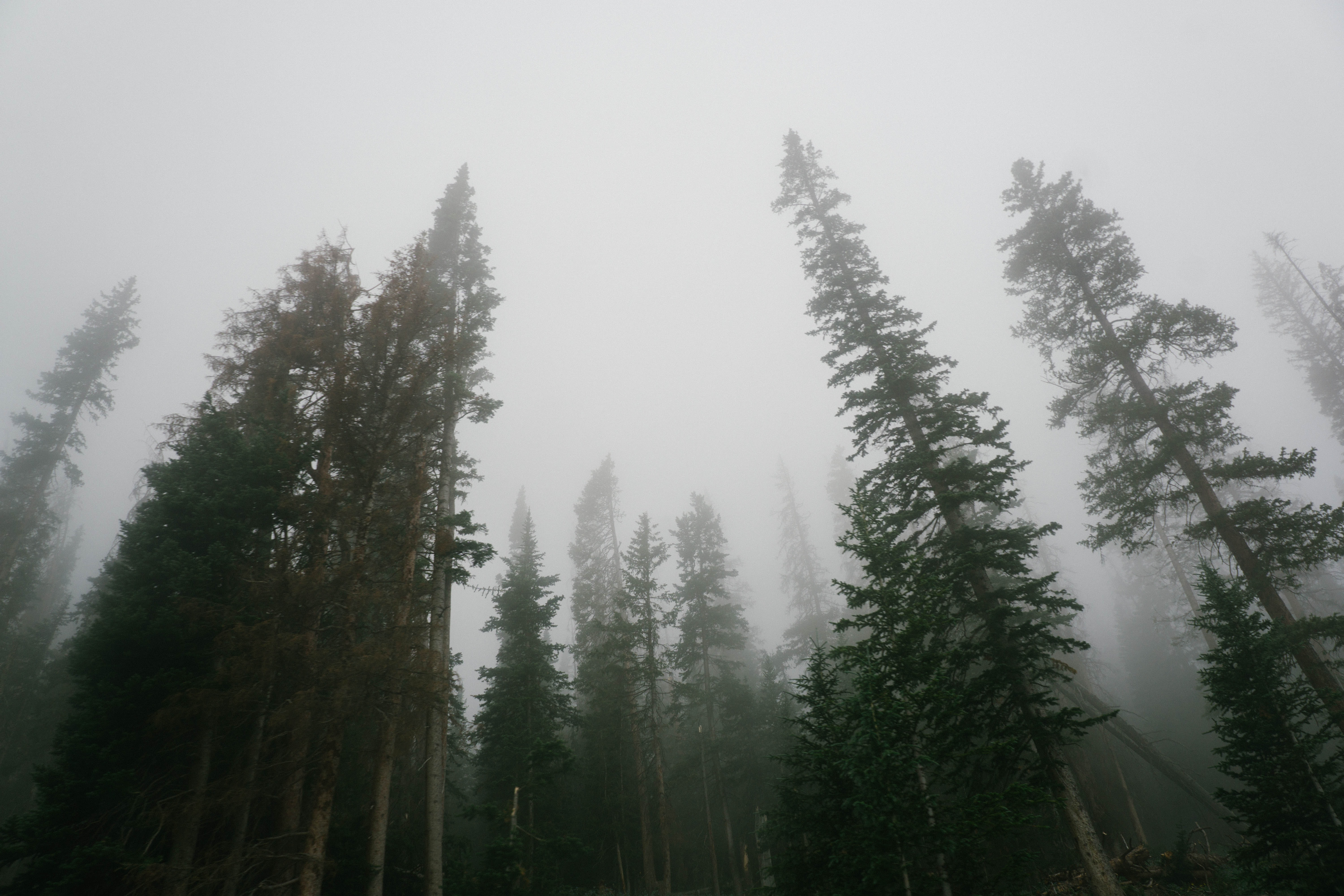 person showing foggy green trees