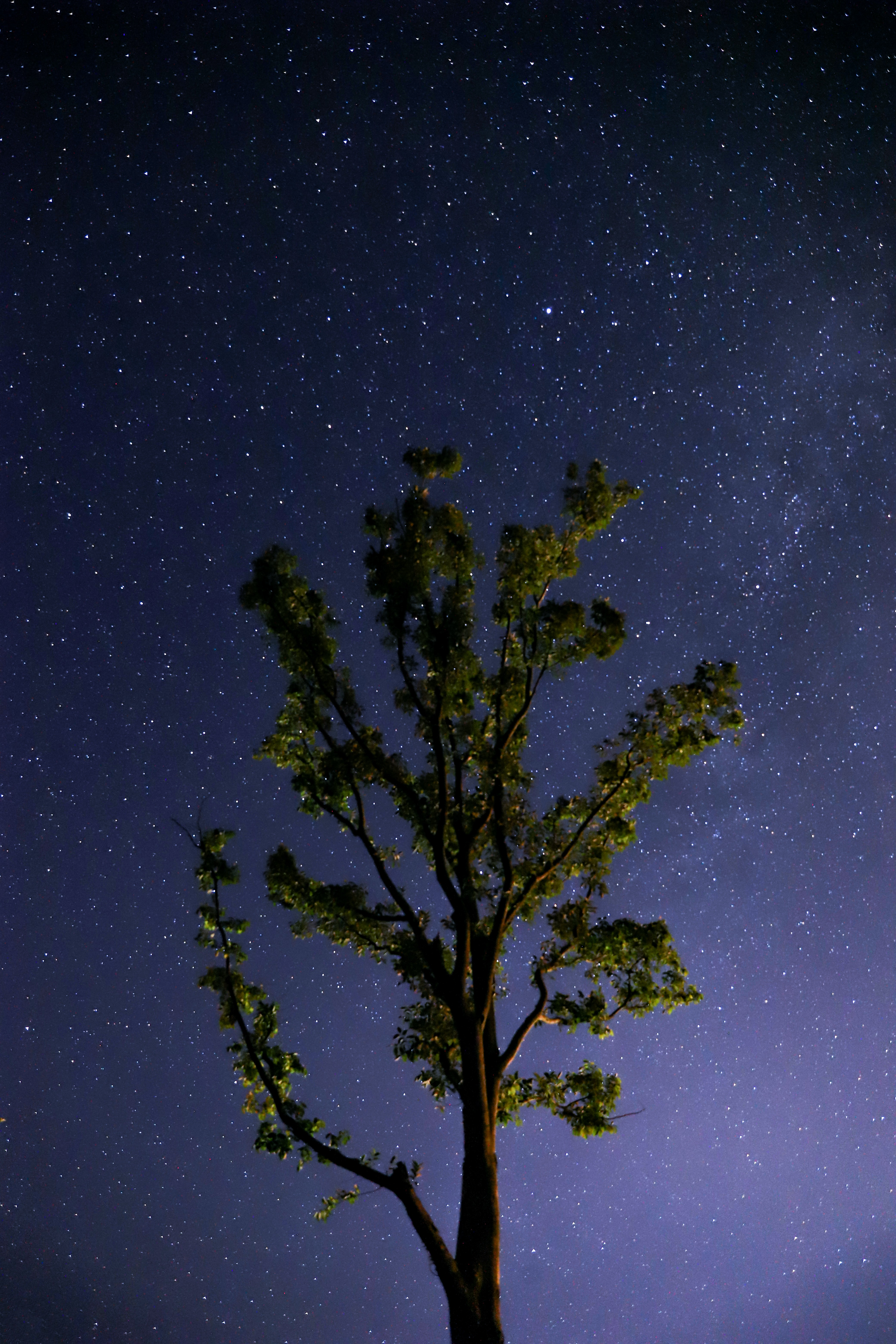 green leafed tree under sky full of star