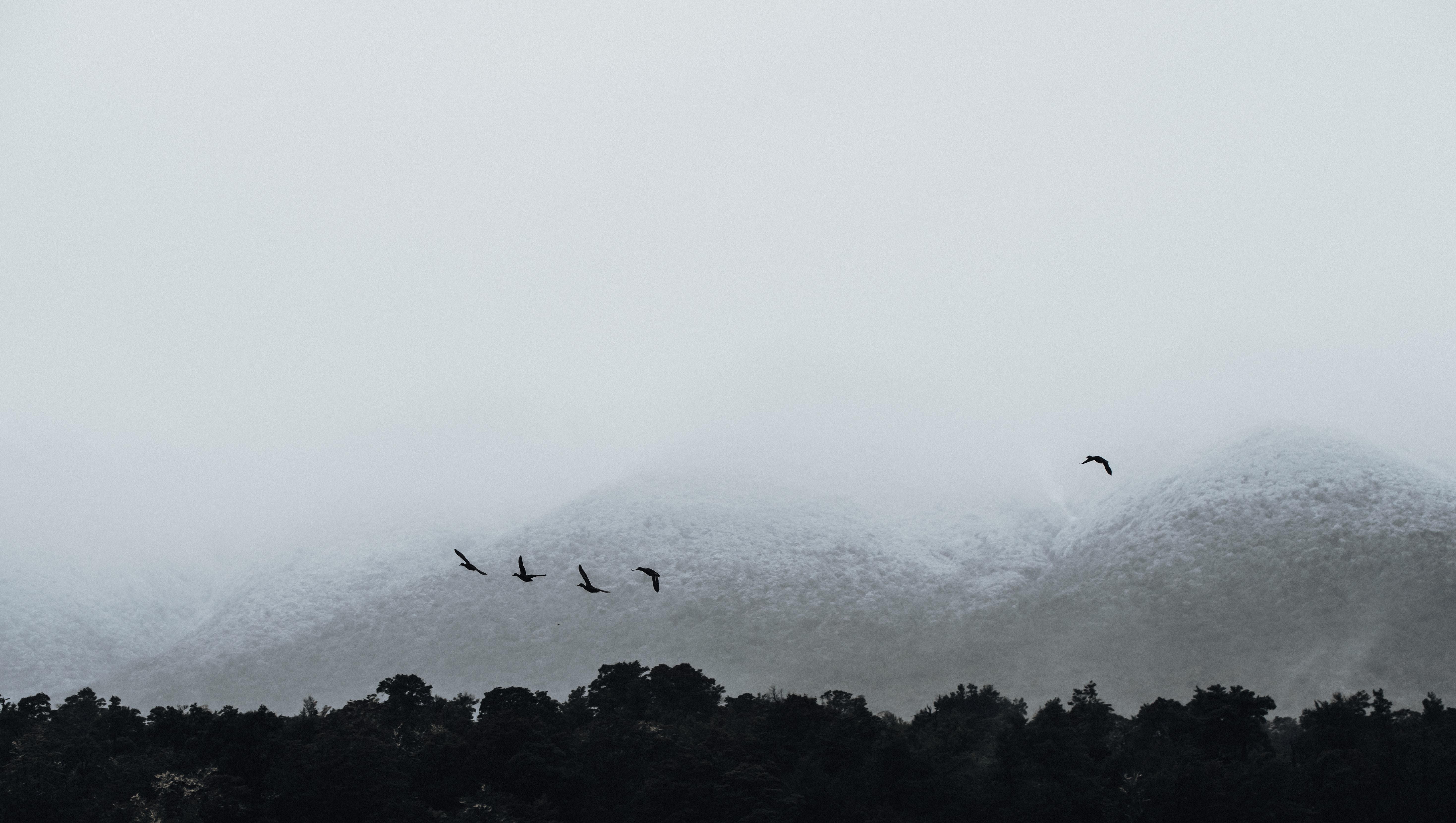 landscape photo of flying birds