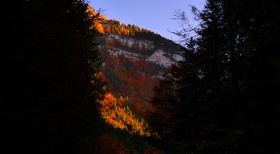 red leaf tree covered mountain at daytime
