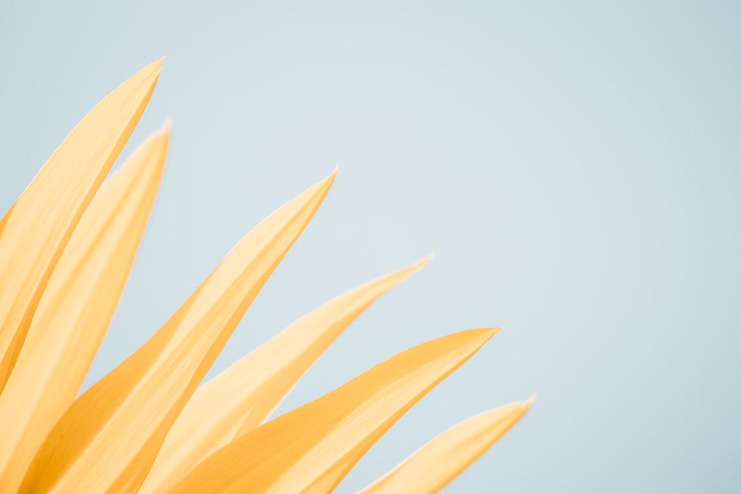 Best 100 Pastel Pictures Download Free Images On Unsplash