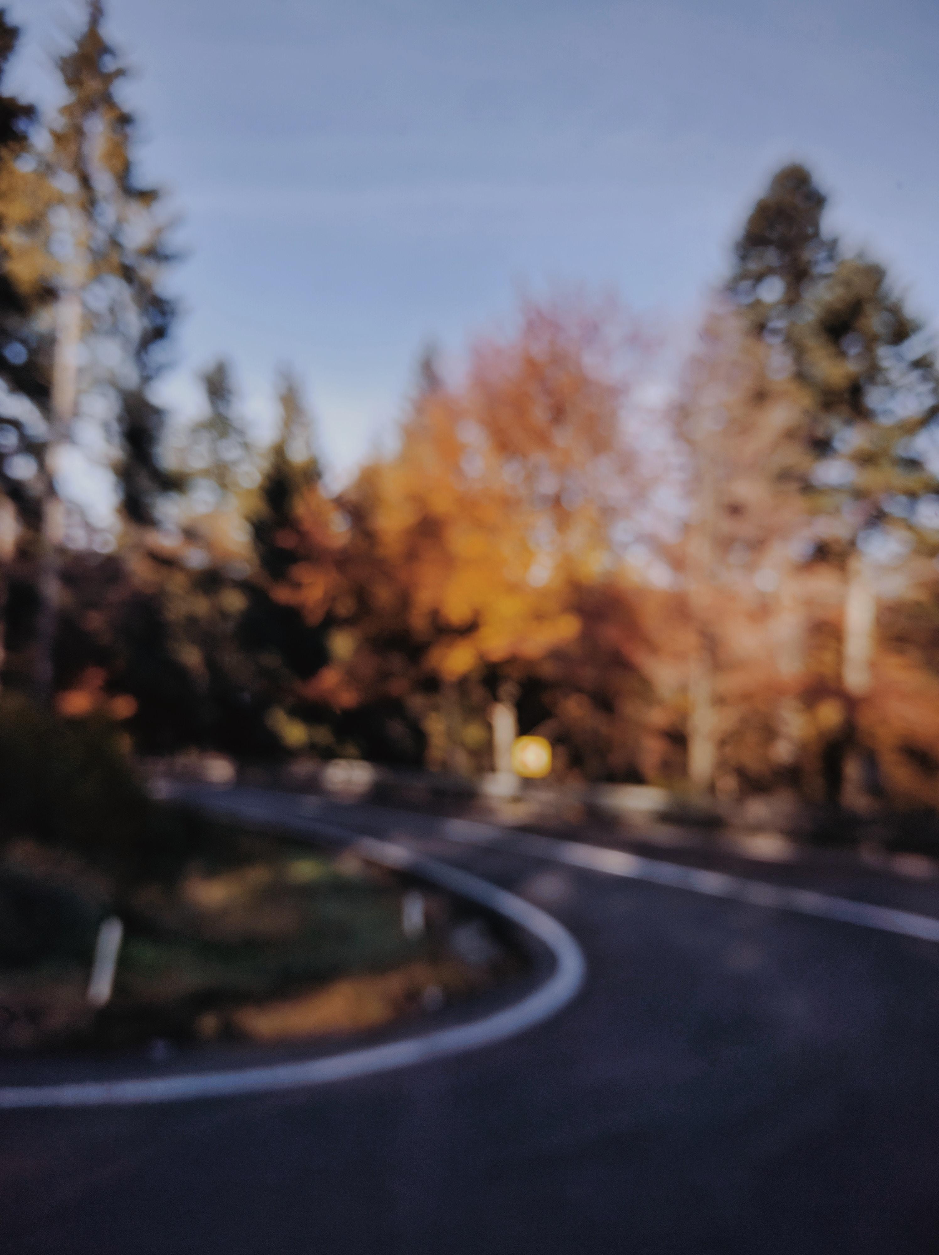 winding road between trees
