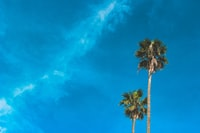low-angle shot photography of two palm trees