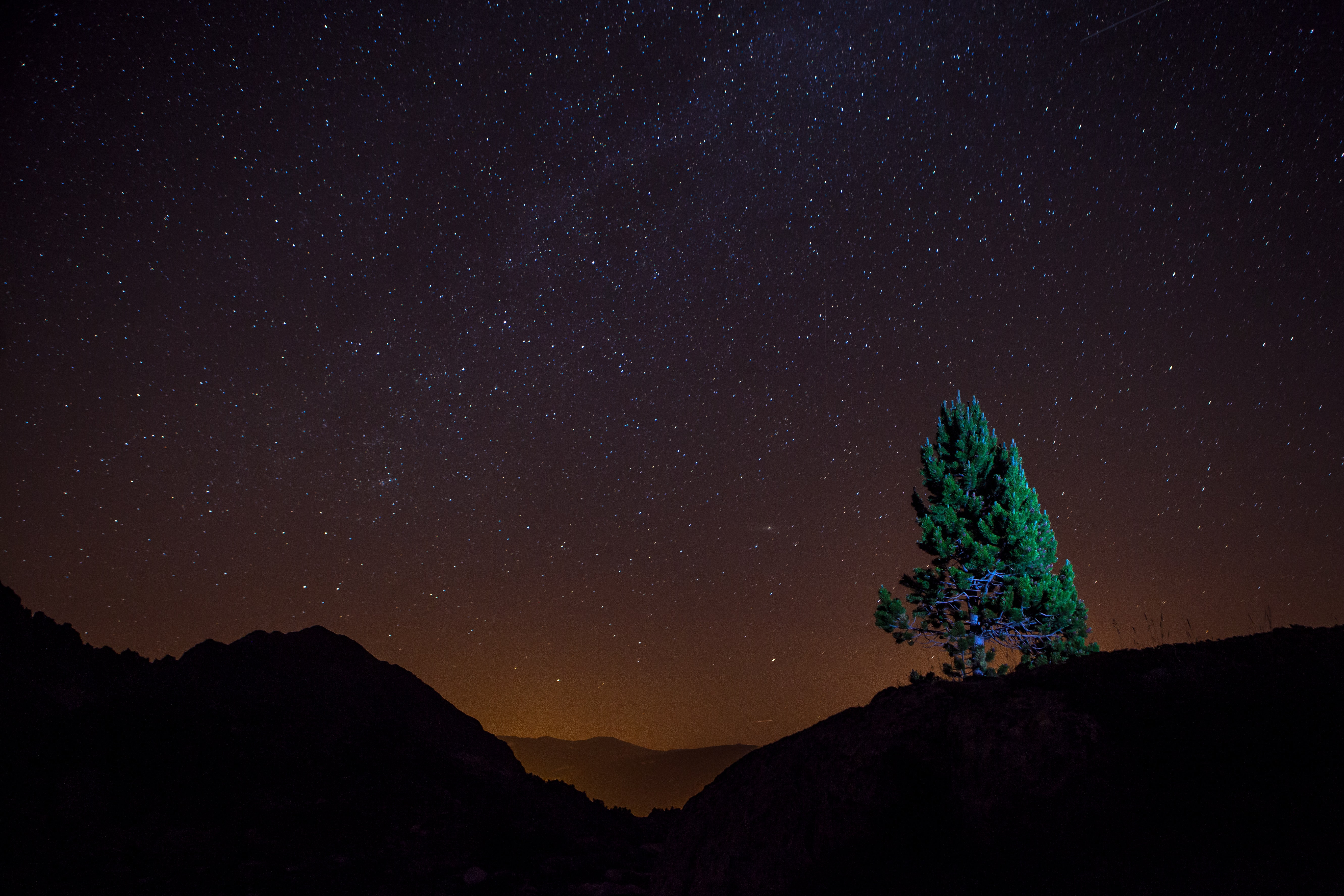 tree on top of hill under starry sky