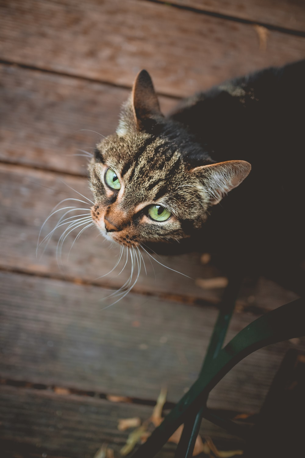 selective focus photography of brown tabby cat looking up