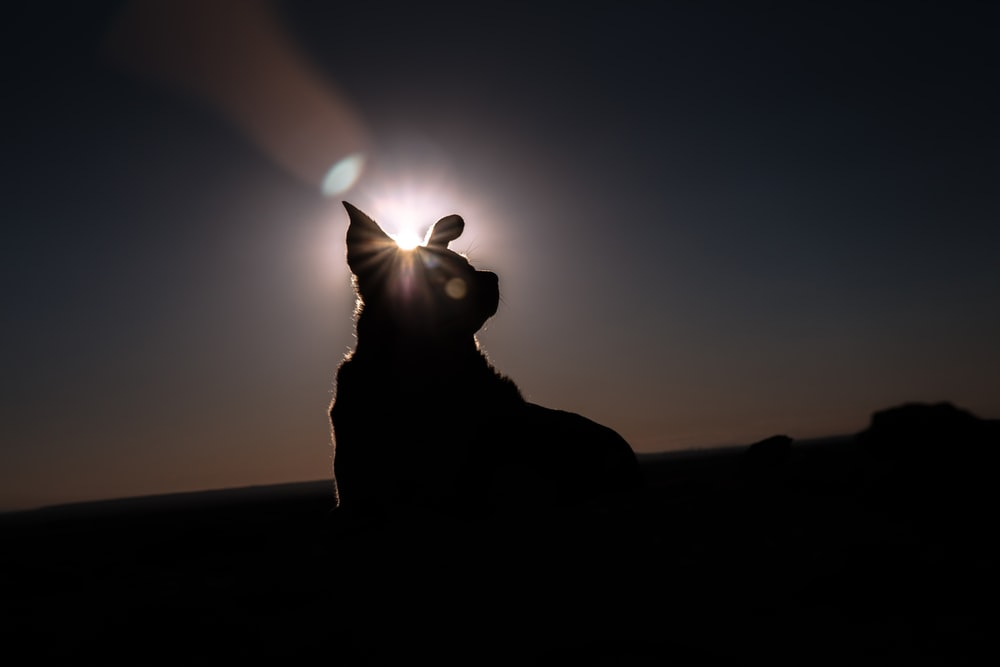 silhouette of man sitting on rock during sunset